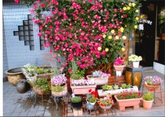 Gardening Contest Mai Beauty Shop1